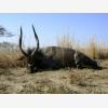 Off To Africa Safaris (6372)