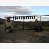 Karoo Wingshooting (6381)