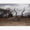 Jaquandi Safaris (6487)
