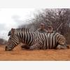 Jaquandi Safaris (6488)