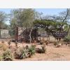 Chimoyo Wildlife & Safaris (6677)