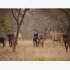Chimoyo Wildlife & Safaris (6682)