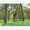 Chimoyo Wildlife & Safaris (6683)